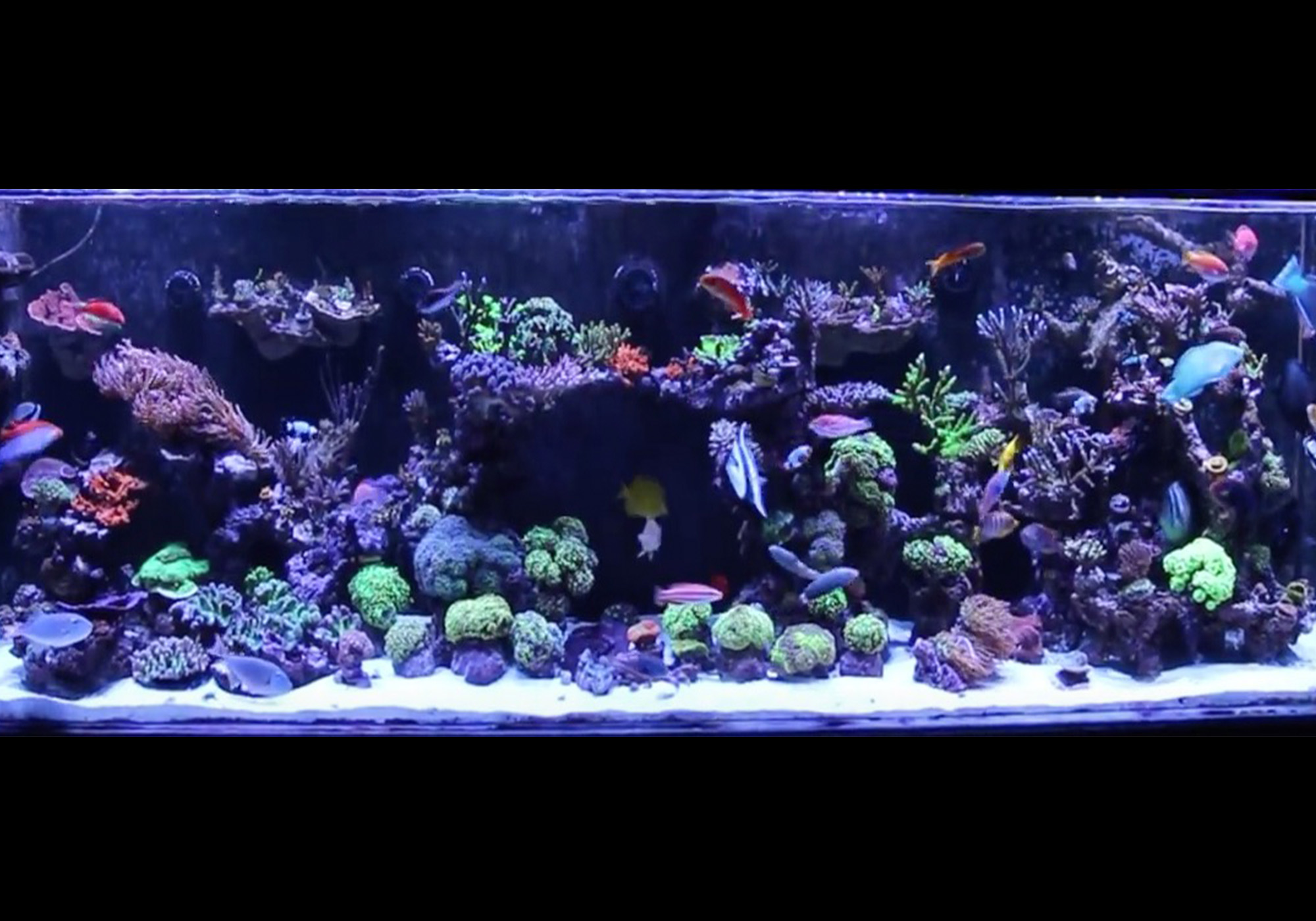Saltwater Aquarium Podcast