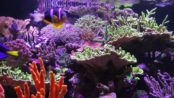 Saltwater aquarium Maintenance