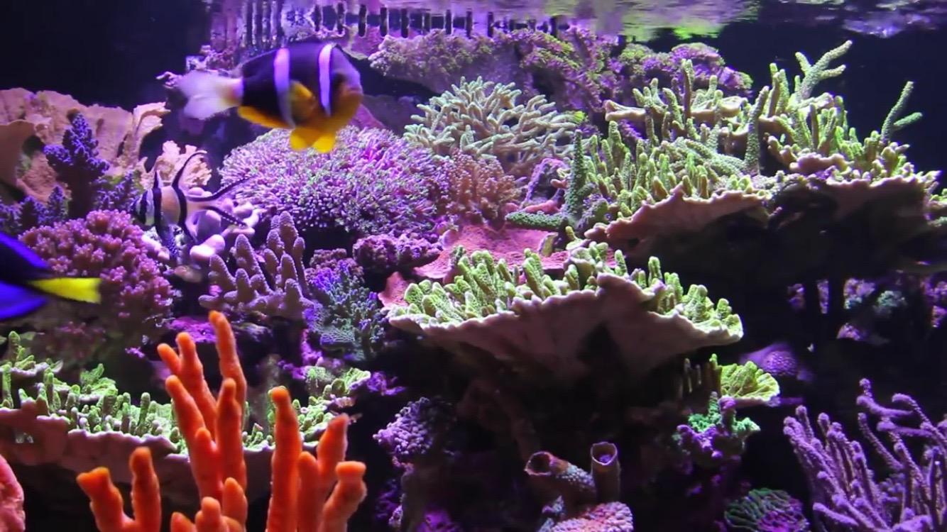Saltwater Aquarium Radio Podcast 003: Saltwater Aquarium
