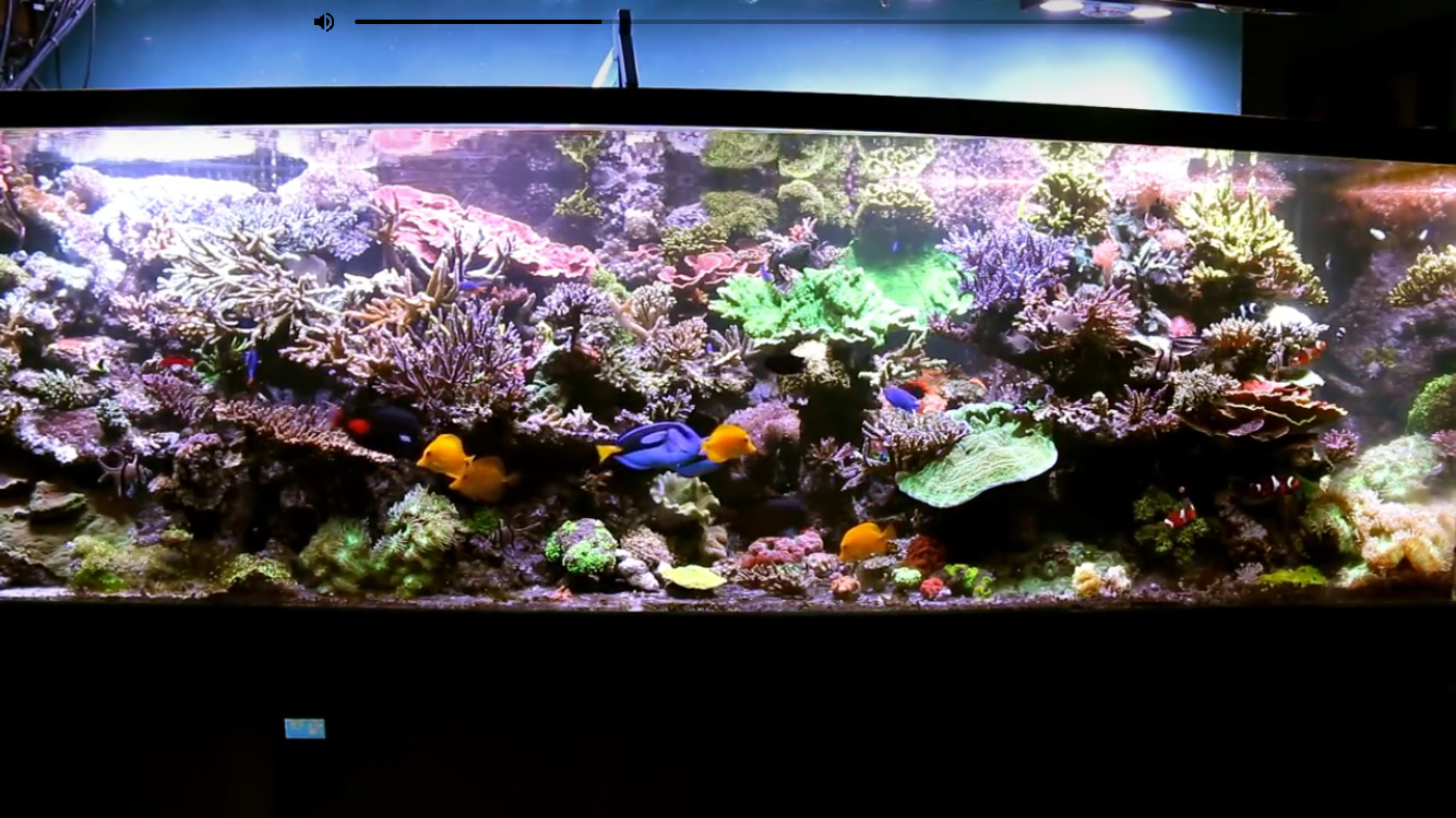 Saltwater aquarium - Saltwater Aquarium Radio Podcast 006 Interview With Dave B From O2manyfish